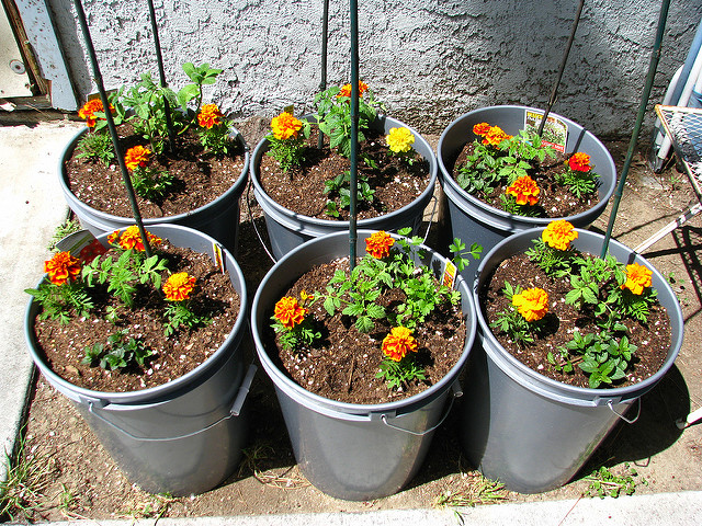 Companion Planting Container