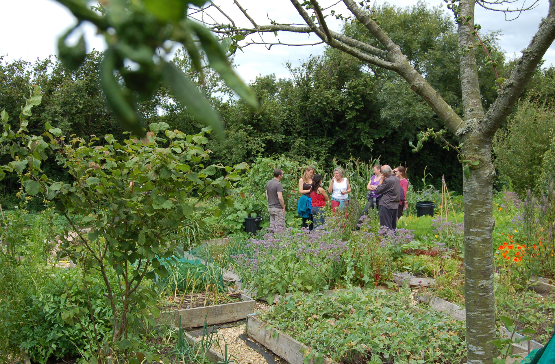 Pat teaching in veg garden from distance