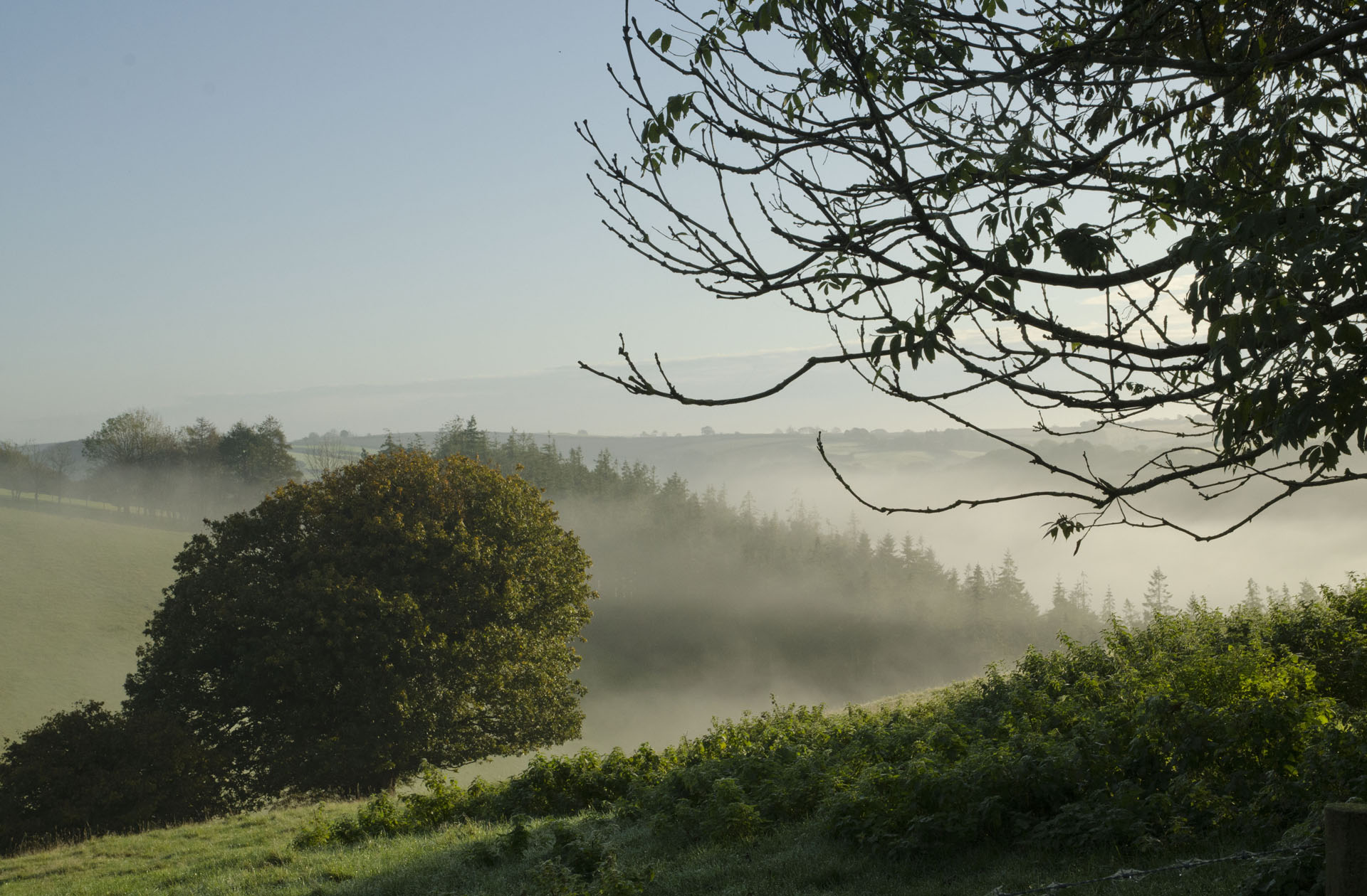 Morning mist - view east from Trelowia